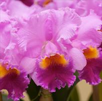 foto-1-esencias-florales-terapia-floral-de-bach